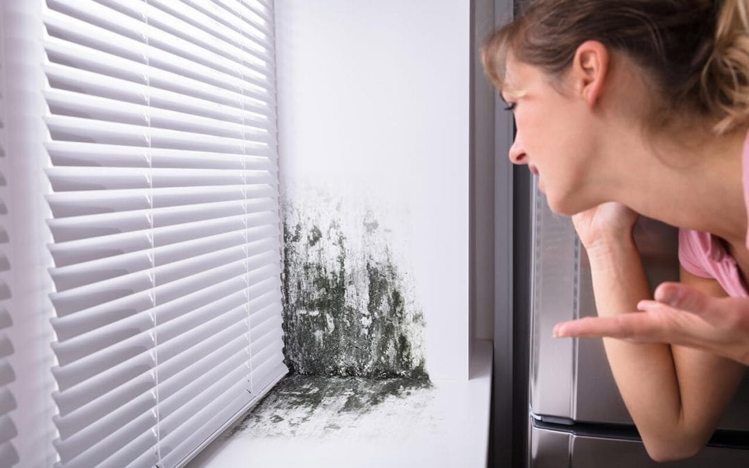 Best Ways to Prevent Mold in the Home